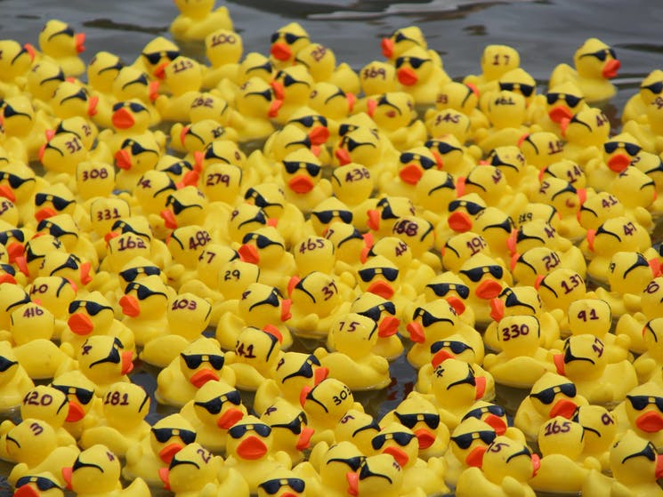Gerringong Men's Shed Annual Duck Derby